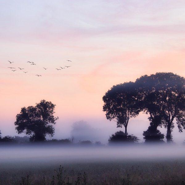 fog-5333546_1920